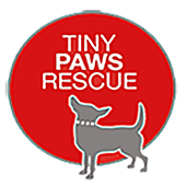 Adopt a Poodle From Tiny Paws in Tomball near Spring