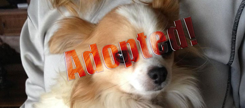 Sweet Spice Needs Surgery: Donate Here